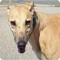 Adopt A Pet :: Money - Roanoke, VA
