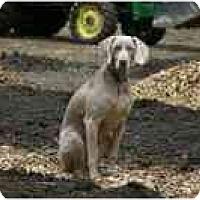 Adopt A Pet :: SAMMY - Attica, NY