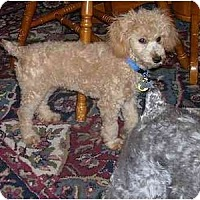 Adopt A Pet :: Mickey - Chandler, IN