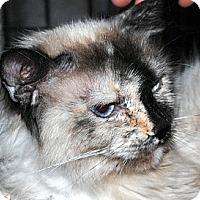 Adopt A Pet :: Nadia - Palmdale, CA