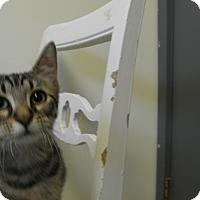 Adopt A Pet :: Alyssa - Milwaukee, WI