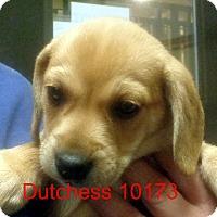 Adopt A Pet :: Dutchess - baltimore, MD