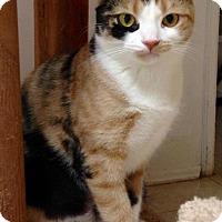 Adopt A Pet :: Sage - River Edge, NJ