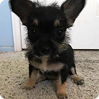 Adopt A Pet :: Ariel - Mission Viejo, CA
