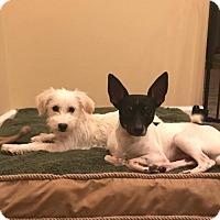 Adopt A Pet :: Truman - Baltimore, MD