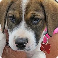 Adopt A Pet :: Danielle - Scottsdale, AZ