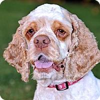 Adopt A Pet :: MADDIE - Tacoma, WA