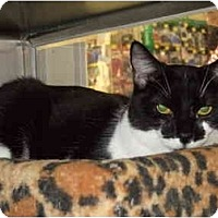Adopt A Pet :: Candy - Fort Lauderdale, FL