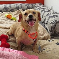 Adopt A Pet :: Vivienne (Gentle Girl) - Santa Monica, CA