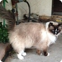 Adopt A Pet :: Ritz - Davis, CA