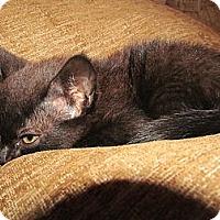 Adopt A Pet :: Ohno - Ocala, FL