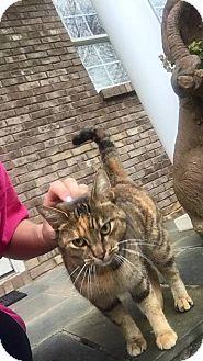 Calico Cat for adoption in McDonough, Georgia - Ezera Jane