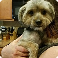 Adopt A Pet :: Stevie Ray - Humble, TX