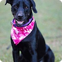 Adopt A Pet :: Jaycee in CT - Manchester, CT