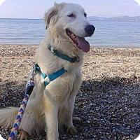 Adopt A Pet :: Malibu - Toronto, ON