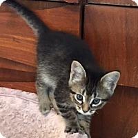Adopt A Pet :: Jasmine - Dallas, TX