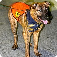 Adopt A Pet :: Tigger - Pompano Beach, FL