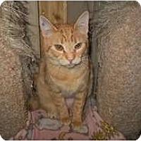 Adopt A Pet :: Saida - Shelton, WA