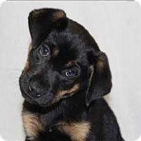 Adopt A Pet :: Elise - Lancaster, OH