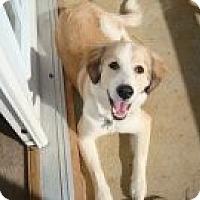 Adopt A Pet :: Zeus - Danbury, CT