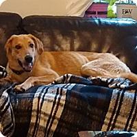 Adopt A Pet :: Morgan - Hamilton, ON