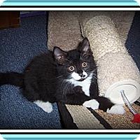 Adopt A Pet :: PEPSI - A HAPPY-GO-LUCKY BABY! - South Plainfield, NJ