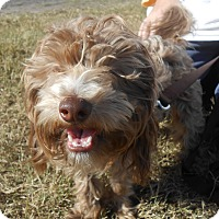 Adopt A Pet :: Luke - Lockhart, TX