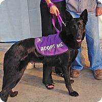 Adopt A Pet :: Zelda - Burbank, CA