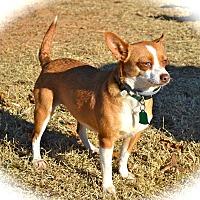 Adopt A Pet :: Chiquita - Blanchard, OK