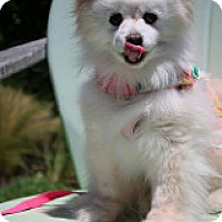 Adopt A Pet :: Princess - Fountain Valley, CA