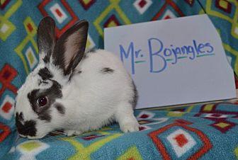 American for adoption in Erie, Pennsylvania - Mr. Bojangles