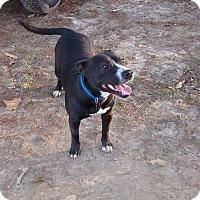 Adopt A Pet :: Marie meet me 1/13 - Manchester, CT