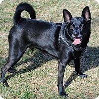 Adopt A Pet :: Sammy - Spring Lake, NJ