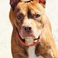 Adopt A Pet :: Reggie - Lafayette, IN