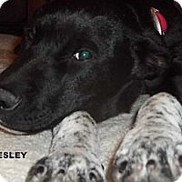 Adopt A Pet :: Presley - Arenas Valley, NM