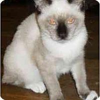 Adopt A Pet :: Thai - Jacksonville, FL