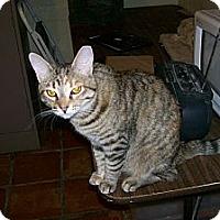 Adopt A Pet :: Twixie - Scottsdale, AZ