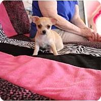 Adopt A Pet :: Pedro - Glastonbury, CT