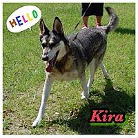 Adopt A Pet :: Kira - Williston, FL