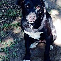 Adopt A Pet :: Gina - Beeville, TX