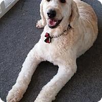 Adopt A Pet :: Levi - Franklin, NC