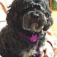 Adopt A Pet :: Pfeffer/Bryce -Adopted! - Kannapolis, NC