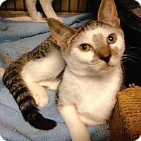 Adopt A Pet :: Arthur - East Brunswick, NJ