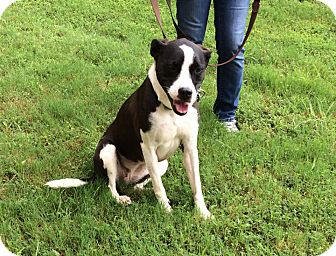 Terrier (Unknown Type, Medium) Mix Dog for adoption in Arlington, Tennessee - Muffin