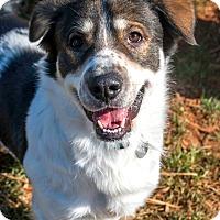 Adopt A Pet :: R2 - Marietta, GA
