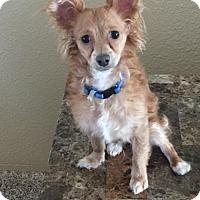 Adopt A Pet :: Leroy Brown - Phoenix, AZ