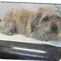 Adopt A Pet :: Polo - Las Vegas, NV