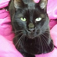 Adopt A Pet :: Panther - South Haven, MI