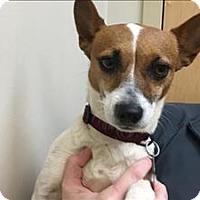 Adopt A Pet :: Leia - Portland, OR