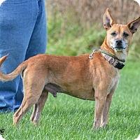 Adopt A Pet :: Jeremiah - Knoxville, IA